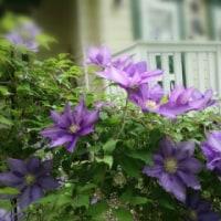 5月4週目のお庭