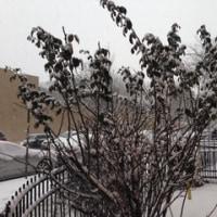 明けまして、大雪のNYCです。
