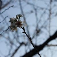 新宿御苑の秋~カップル編~