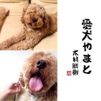 愛犬やまと!木村勝則滋賀県高島市!