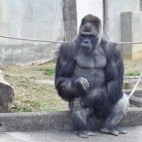 東山動物園再開
