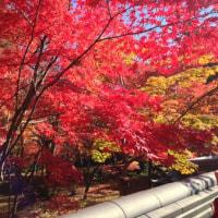 京都も、そろそろ、紅葉が気になる時期に、、、、