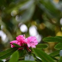 石楠花の初撮り