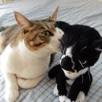 猫のソックスのあみぐるみさん