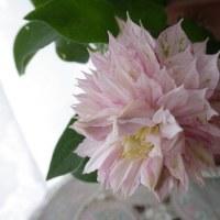 母の日の花達色々