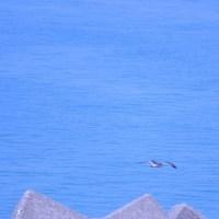 春の海 のどかにカモメ