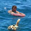 石垣島taitaiの看板犬