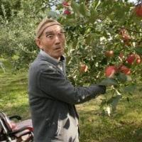 リンゴ狩り!