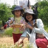花盛り!カモミール摘み