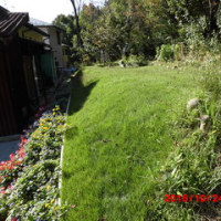 草刈り機で「芝生刈り」をします。