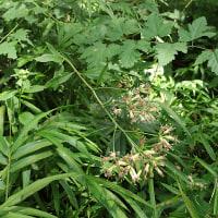 木更津市の植物