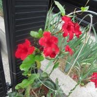 秋の植物その2