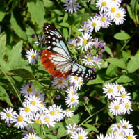 蝶の長旅の無事を祈って