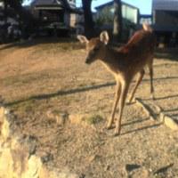 SST経験交流と鹿