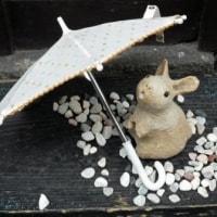 すぐに梅雨…傘がない