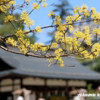 桜も散り花に