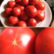 東成瀬産の完熟トマトが入荷しました