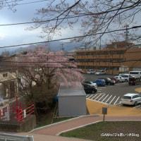 八幡平の雪の回廊を見に行きました。
