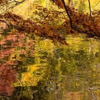 松池の映り込み