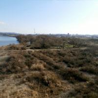 猫散歩・倉敷大橋を渡り水江の渡しまで歩く