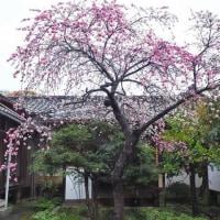 有栖川宮邸を訪ねて