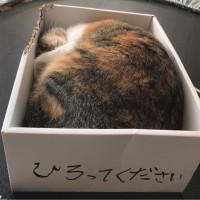 みかん箱にバウンドケーキ