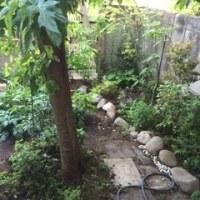 在来種の庭づくり