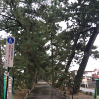 2/5-6 静岡と箱根の旅🎵