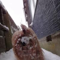 ぼた雪まみれ