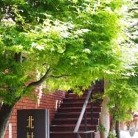 2017春 京都へ 二日目 ・・・ 蓮華寺~実相院~北村美術館~今熊野観音堂