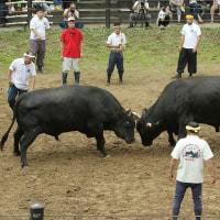 デジブック 『牛の角突き』