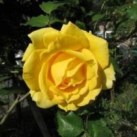 お花キレイでちゅ(⋈◍>◡<◍)。✧♡その3