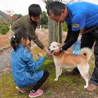 温泉施設の迷い犬「さくら」 善意募金でガン手術(滋賀)