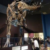 恐竜展2016 (2)