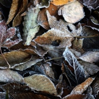 12月8日  初霜の朝