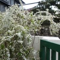 寒い日が続きます すぐ4月なのにね~。