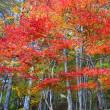 五葉山中腹の紅葉