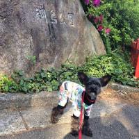 やっぱりブランブラ〜ン@綱島公園…ですぅ