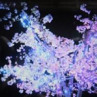 """LINEでしあわせ回廊・奈良・瑠璃絵の画像が・柊ちゃんは動物は?なのか"""""""""""