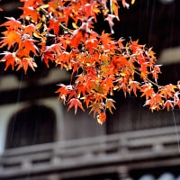 雨の丈六寺へ