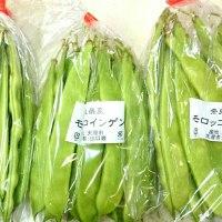 日替わりマルシェ「奈良産直センター」さんの野菜が入荷♪