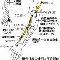 橈骨神経麻痺の針灸治療 Ver.2.2
