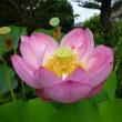 美しい花とトンボ