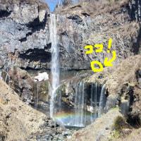 華厳滝の主・カモシカ