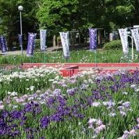 花ショウブ祭り