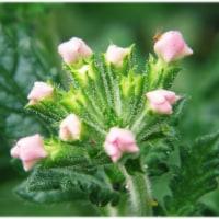 可愛い花(その2)
