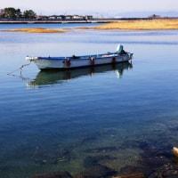 香良洲海岸 海鳥の飛翔