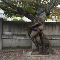 まち歩き東0249  たくましい樹だ  素晴らしい