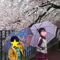 雨のお花見