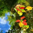 福島市民家園に咲く花々レンゲショウマ ヤマユリ ウバユリ